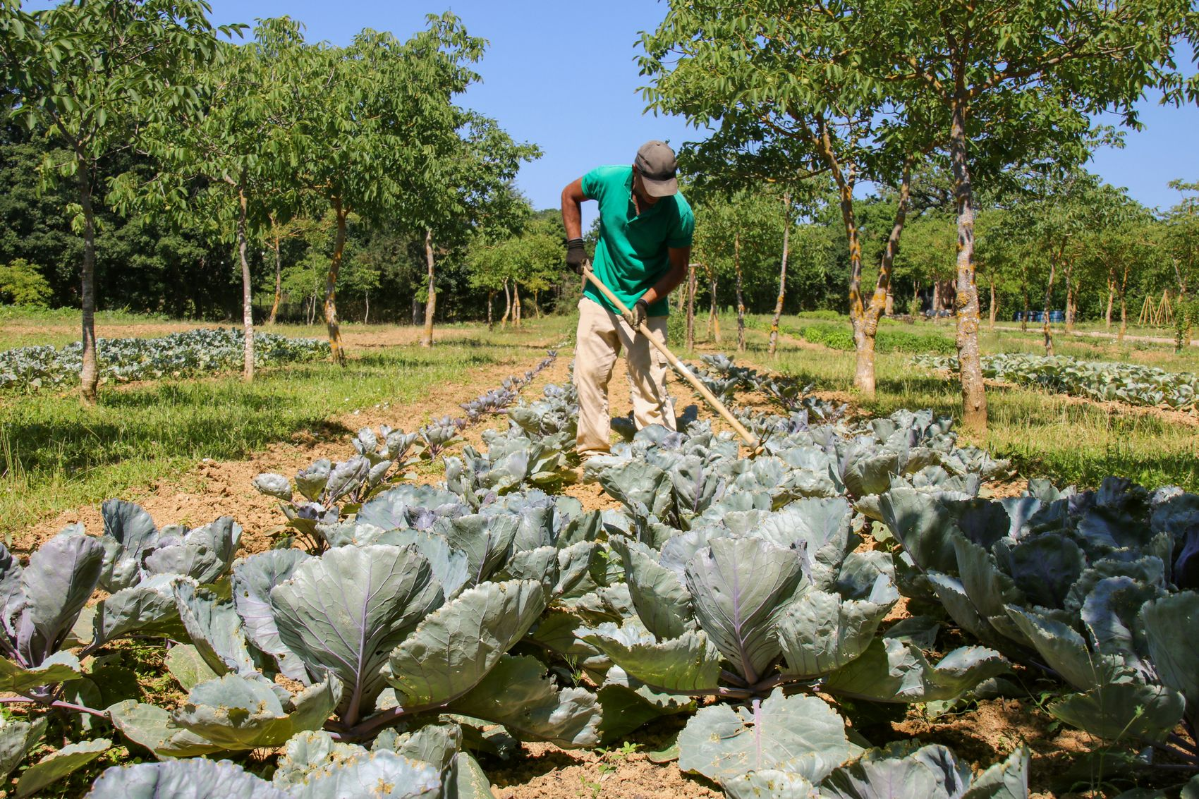 Farmer cultivating vegetables in Borgo Santo Pietro estate