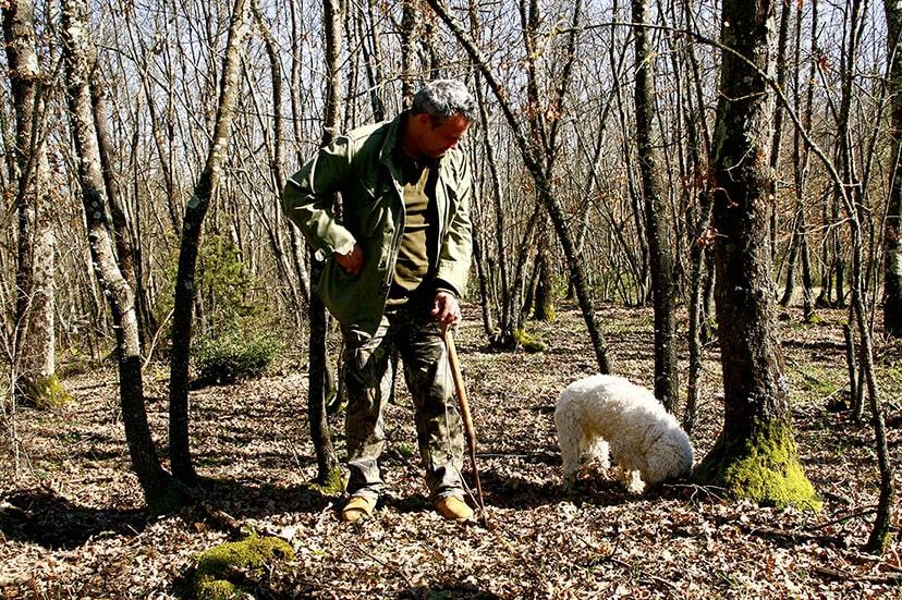 Chasse à la truffe en Toscane