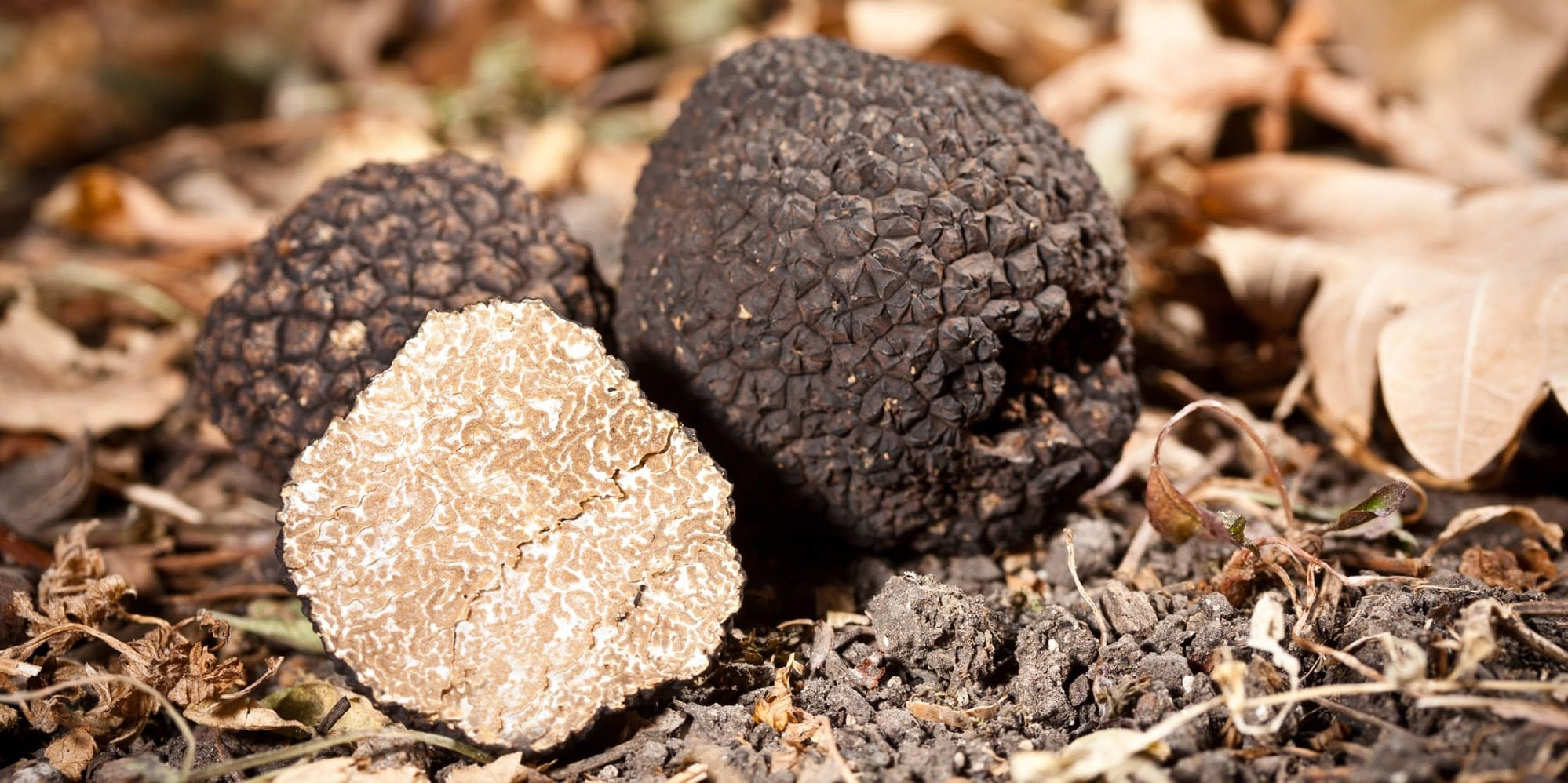 Truffles hunting in Tuscany